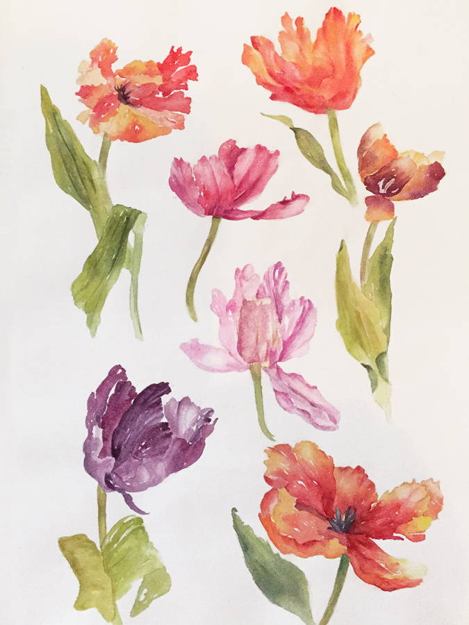 Mary Licause, Tulips, watercolor, 24 x 18 in.-