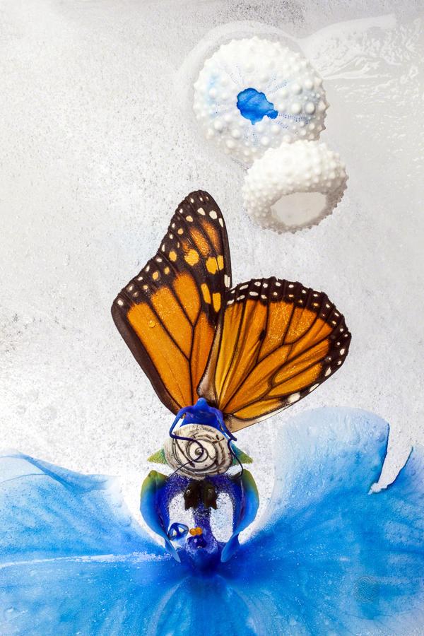 Blue Orchid Wings-f2ca0cec
