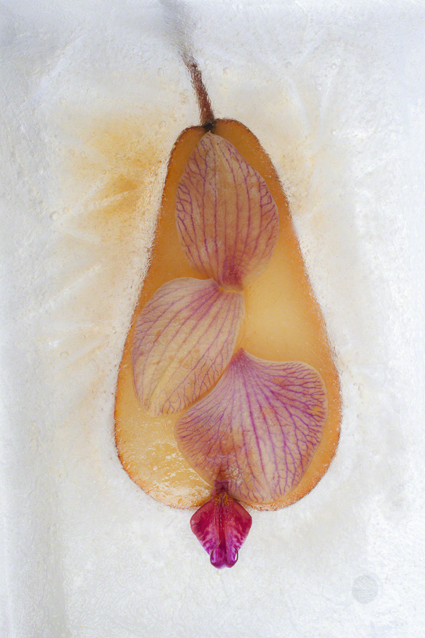 PearWithOrchid-9ff81313